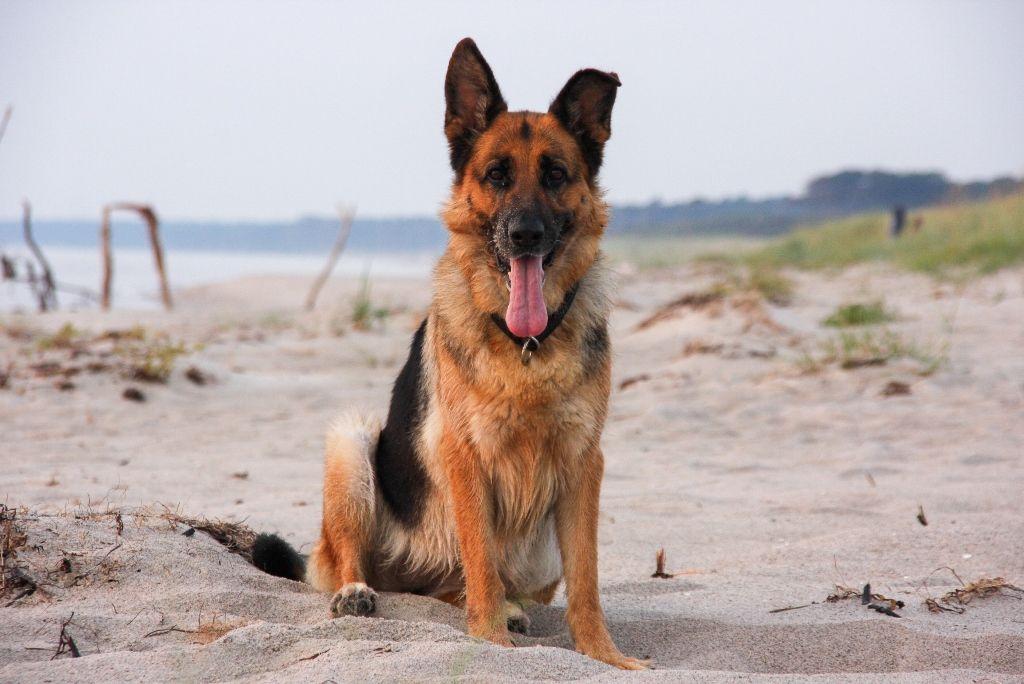 Urlaub mit hund die sch nsten hundestr nde auf dem for Ferien auf juist mit hund